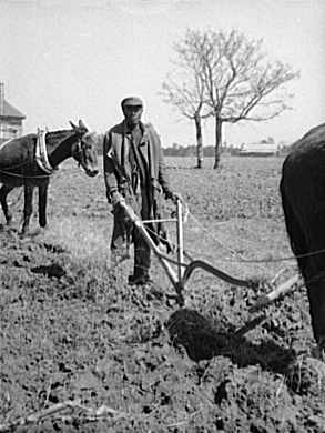 Sharecropper Ploughing, Montgomery, Alabama, 1944. Farm Security Administration Photograph Collection